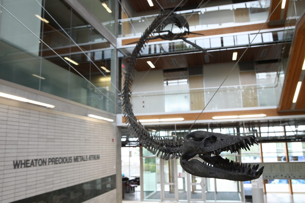 Project Services helps UBC museum welcome ancient sea monster